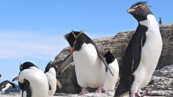viluinen pingviini