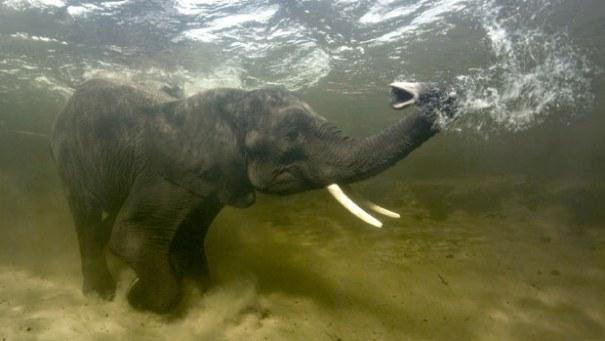 Intian valtamerestä löydetty elävä fossiili